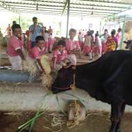Goshala Visit